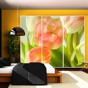Fototapeta tulipanowe quatro nr F213488