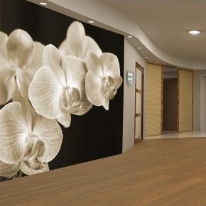 Fototapeta Kremowa orchidea nr F213045