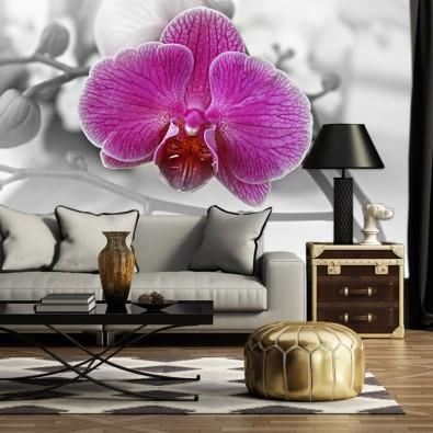 Fototapeta Orchidea fioletowa nr F213050