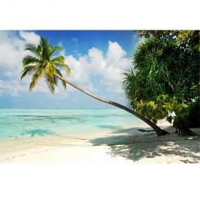 Fototapeta tropiki palma nr F213052