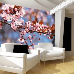 Fototapeta kwiat jabłoni nr F213563