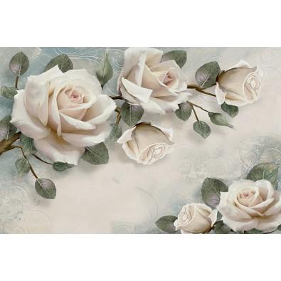 Fototapeta róża nr F214201 - prawdziwe zdjęcie