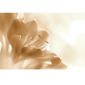 Fototapeta kwiat storczyk sepia nr F213014