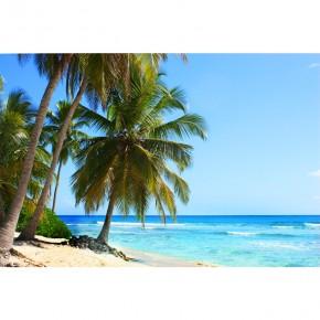 Fototapeta tropikalna palma nr F213057